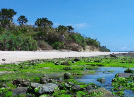 Pantai Parang Ireng Alas Purwo Banyuwangi