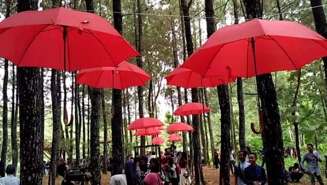 Rumah Pinus Songgon Banyuwangi