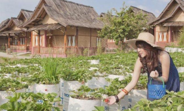 Saung Gawir Ciwidey