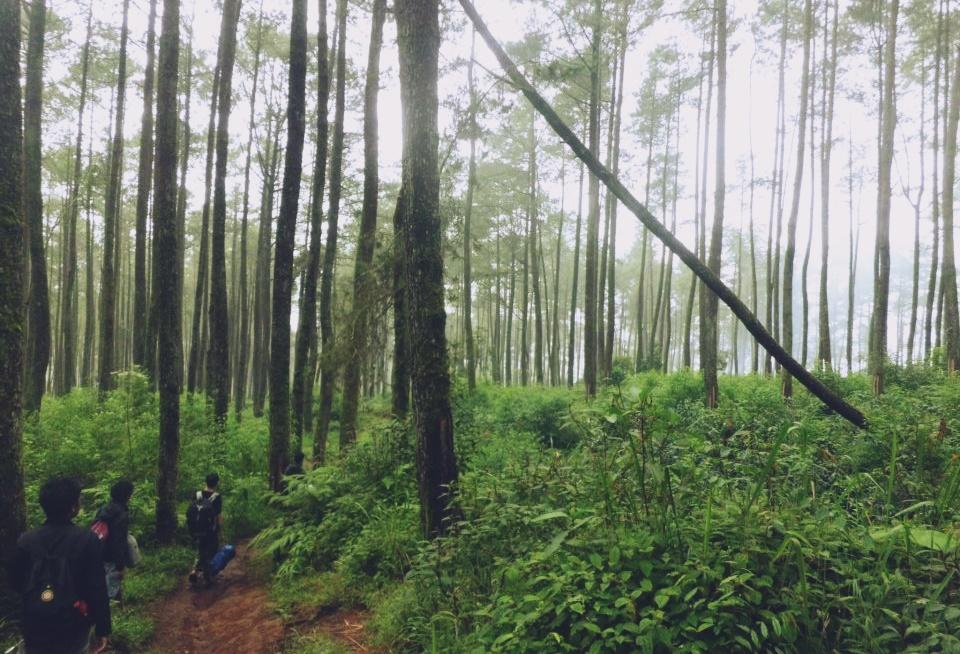Obyek Wisata Alam Taman Hutan Jaya Giri Lembang Bandung