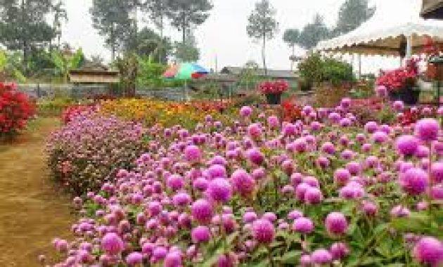 Obyek Wisata Keluarga Kebun Begonia Lembang Bandung
